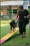 Junghunde-Agility-Seminar