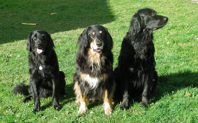 Afra, Ira und Iaron