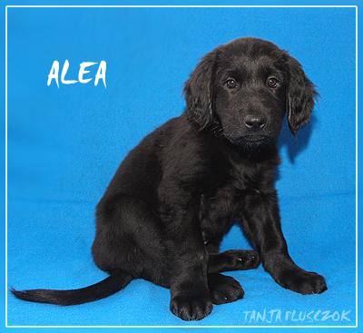 Alea4-A