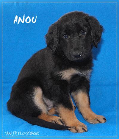 Anou4-A