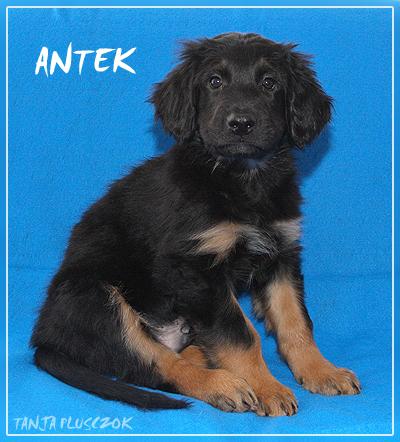 Antek4-A