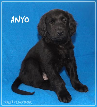 Anyo4-A