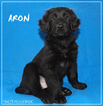Aron4-A
