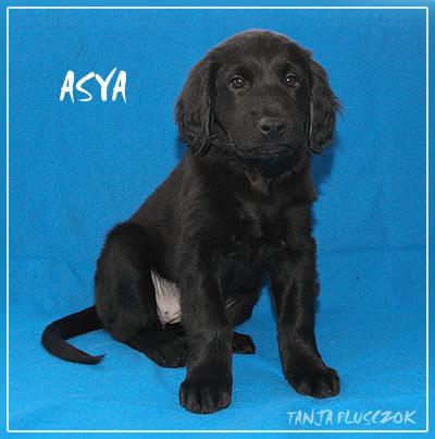 Asya4-A