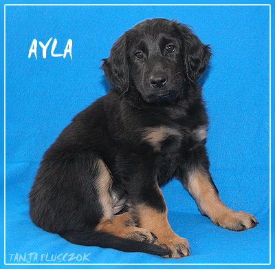 Ayla4-A